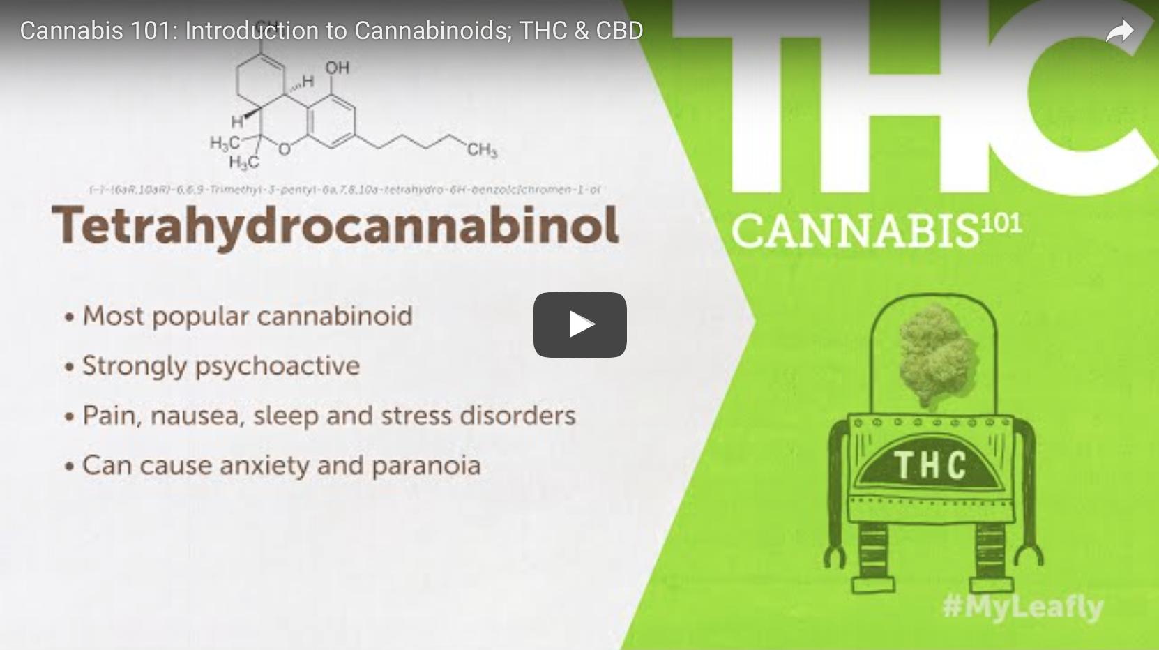 THC & CBD Video