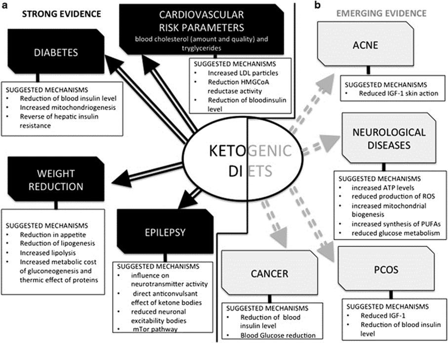 Nutritional Ketosis: The WHY? » Live Fit: This is my journey